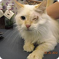 Adopt A Pet :: Candace - Riverside, RI