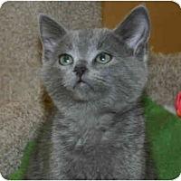 Adopt A Pet :: Shay Bear - Irvine, CA