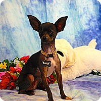 Adopt A Pet :: Mochi - Vacaville, CA
