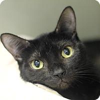 Adopt A Pet :: Ella Bella - Chicago, IL