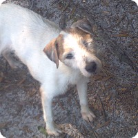 Adopt A Pet :: Rascal - Williston, FL