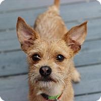 Adopt A Pet :: Twister - Smyrna, GA