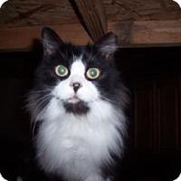 Adopt A Pet :: Taylor - Windsor, CT