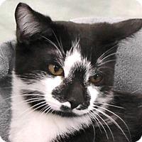 Adopt A Pet :: Picasso - Redondo Beach, CA