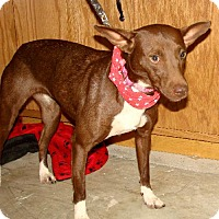 Adopt A Pet :: Cassie - Holly Springs, MS
