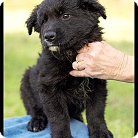 Adopt A Pet :: Heath - Harmony, Glocester, RI