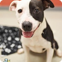 Adopt A Pet :: Suzie * (Lonely Heart) - Gulfport, MS