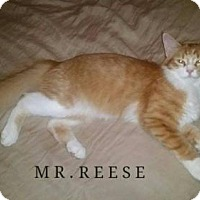 Adopt A Pet :: Reese - Albuquerque, NM