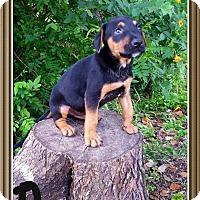 Adopt A Pet :: Ruger - Leming, TX
