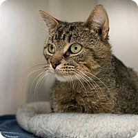 Adopt A Pet :: Rascal - Toronto, ON