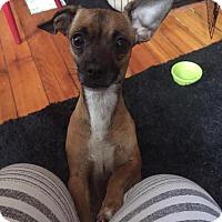 Adopt A Pet :: Sage - Dayton, OH