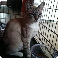 Adopt A Pet :: MillerPENDING - Carlisle, PA