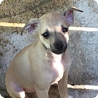 Adopt A Pet :: Jada - Charlotte, NC