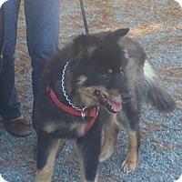 Adopt A Pet :: Logan - Petaluma, CA