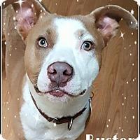 Adopt A Pet :: Buster - Boston, MA
