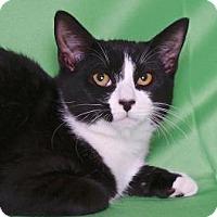 Adopt A Pet :: THE GREAT GAZOO - Gloucester, VA
