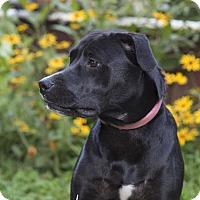 Adopt A Pet :: Camille - Middletown, DE