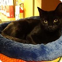 Adopt A Pet :: Liberty - Manhattan, KS