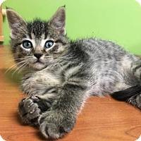 Adopt A Pet :: Willis - Neenah, WI