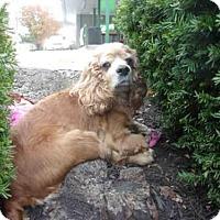 Adopt A Pet :: A605385 - Louisville, KY