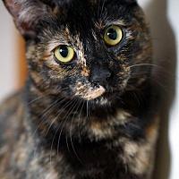 Adopt A Pet :: Ginger - Alameda, CA