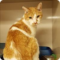 Adopt A Pet :: C7 - Indianola, IA