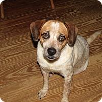 Adopt A Pet :: Alice - Harmony, Glocester, RI