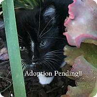 Adopt A Pet :: Tina (Adoption Pending) - Monrovia, CA