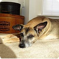 Adopt A Pet :: Daisy - Fredericksburg, VA