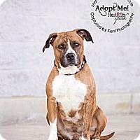 Adopt A Pet :: Pippa - Medina, OH