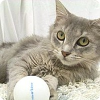 Adopt A Pet :: Daisy - Arlington, VA