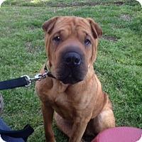 Adopt A Pet :: Comere - Gainesville, FL