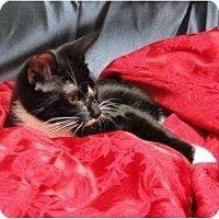 Adopt A Pet :: Flame - Orlando, FL