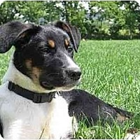 Adopt A Pet :: Jake - Tiffin, OH