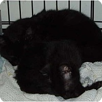Adopt A Pet :: Millie and kitten - Westfield, MA