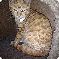 Adopt A Pet :: Tigger - East Hanover, NJ