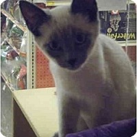 Adopt A Pet :: Chop Suey - Brea, CA
