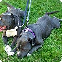 Adopt A Pet :: Bonded Pair - Rancho Cucamonga, CA