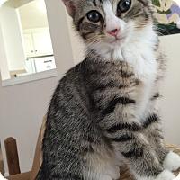 Adopt A Pet :: Meredith - Monroe, GA