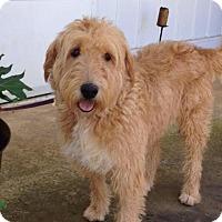 Adopt A Pet :: Atco NJ - Franny - New Jersey, NJ