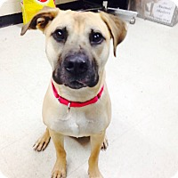 Adopt A Pet :: Tessa - Willington, CT