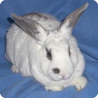Adopt A Pet :: Dorothy - Woburn, MA