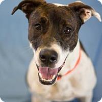 Adopt A Pet :: Kramer - Bradenton, FL