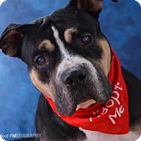 Adopt A Pet :: S/C Lamar - Miami, FL