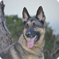 Adopt A Pet :: Olive - Mira Loma, CA
