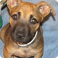Adopt A Pet :: Elsa - Rocky Mount, NC