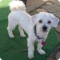Adopt A Pet :: Harvey - Pardeeville, WI