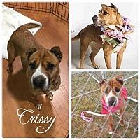 Adopt A Pet :: Crissy - Hope, BC