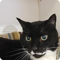 Adopt A Pet :: Albert - Reisterstown, MD