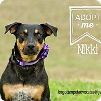 Adopt A Pet :: Nikki - Pearland, TX